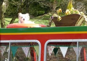 5 - Trip boat dog