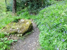 Path edged with bluebells 1