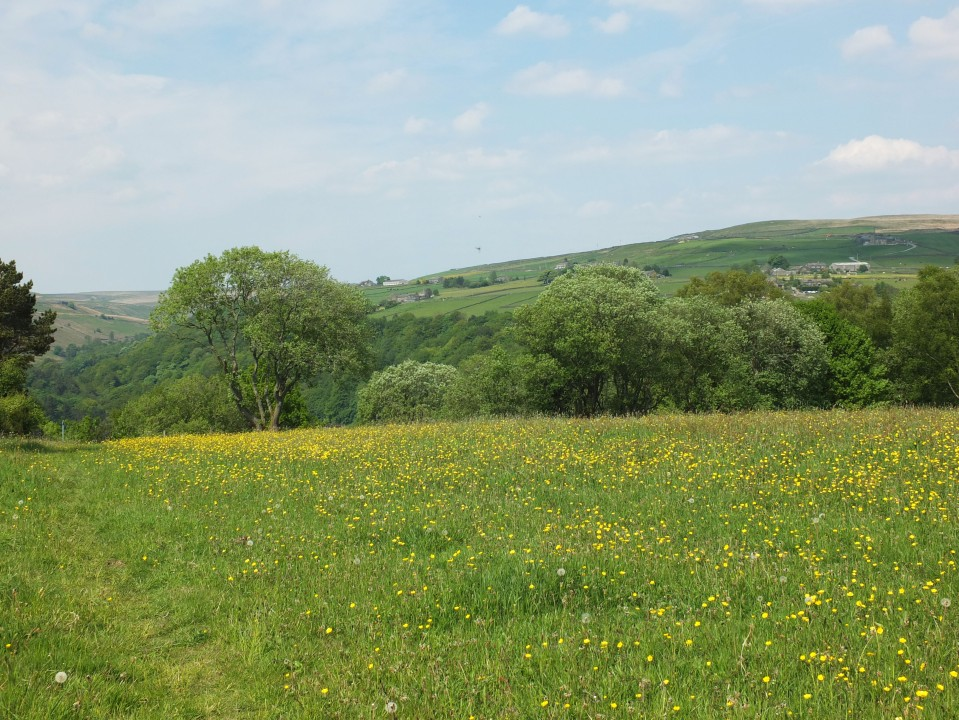 Heptonstall meadow view 2