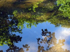 Tree reflections 7