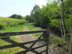 First gate 2