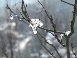 Ice lumps 1