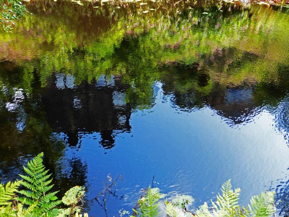 Mill Ponds 8