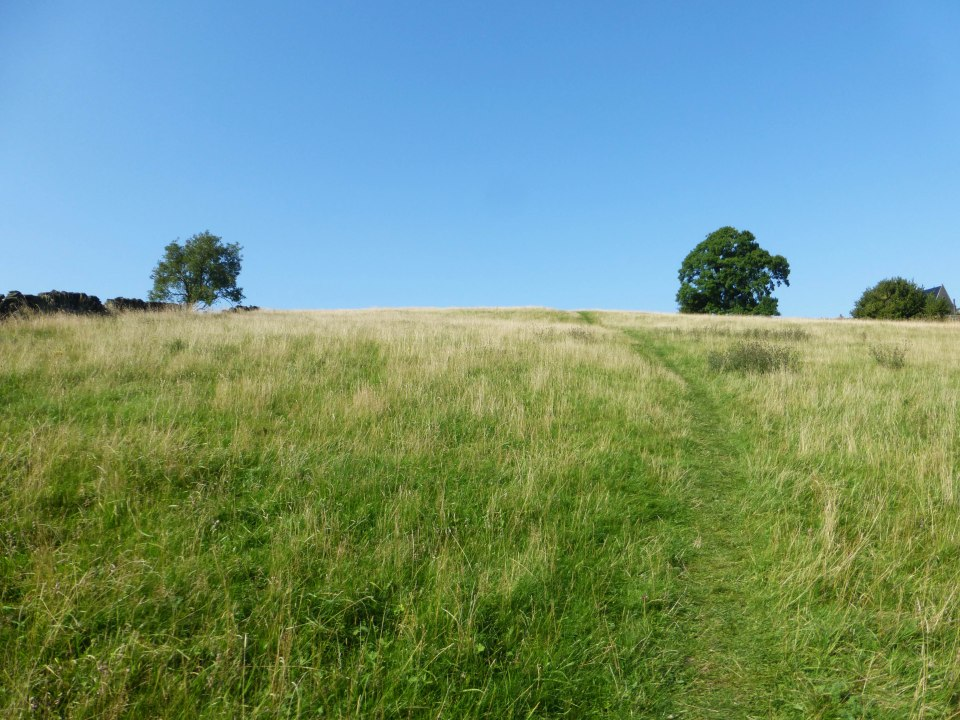 Path Via Field 1