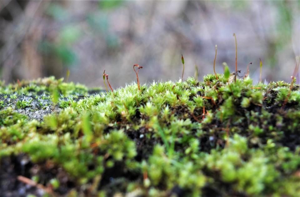 Tiny moss 2